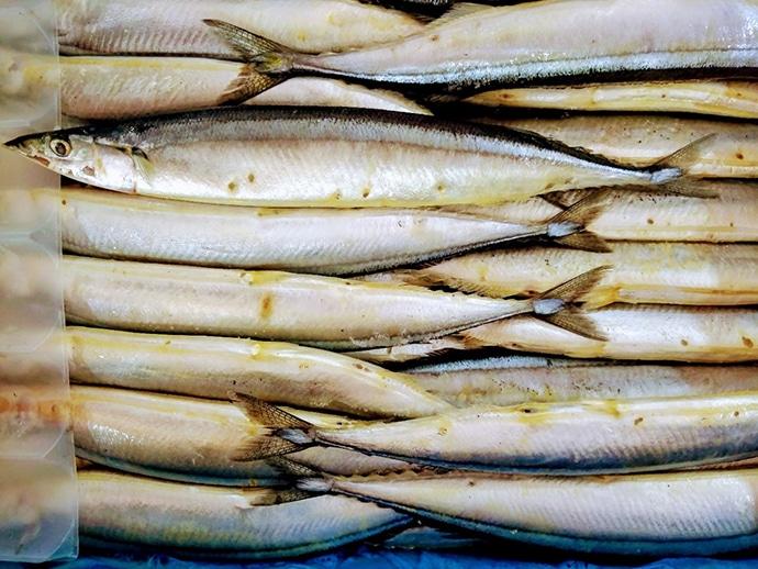 水産会社勤務のプロが教える「おいしい旬魚」の見分け方:『サンマ』