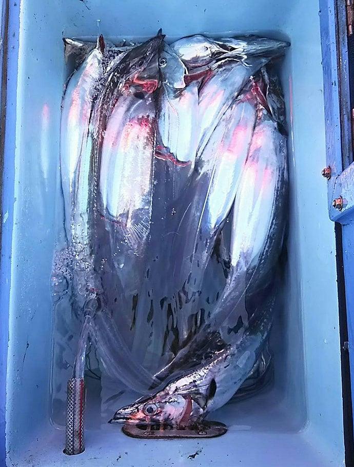 船テンヤタチウオで産卵前の荒食い堪能 ハイアピールが決め手【夢丸】