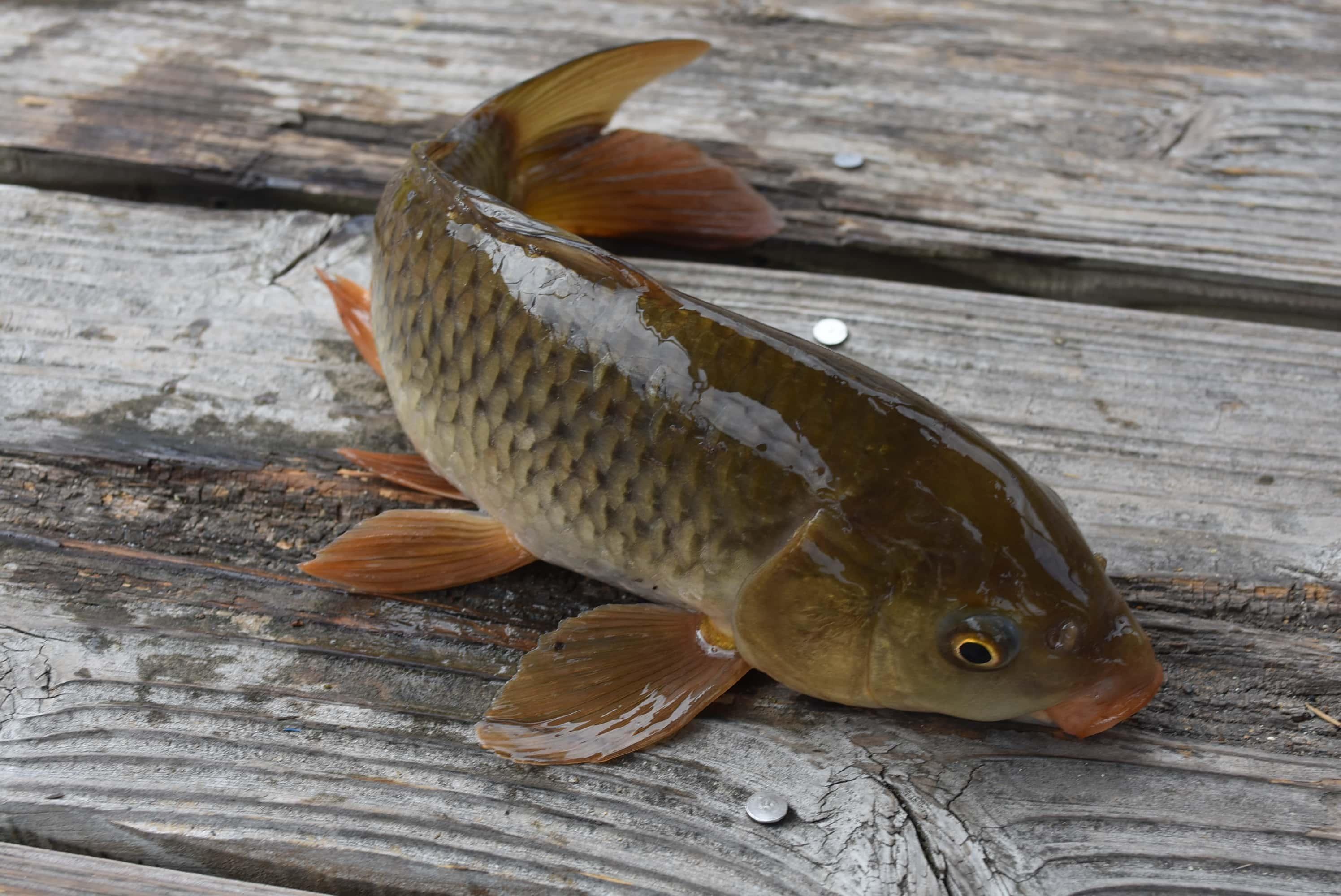 初めての釣り体験に密着 子供はタモ入れがお好き?【竜田川釣り池】