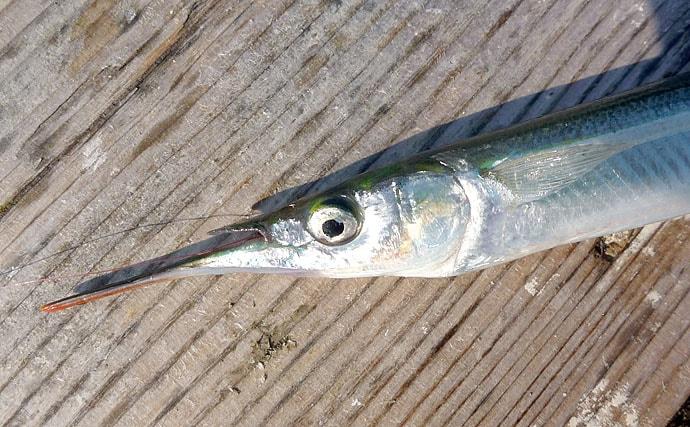 陸っぱりサヨリ釣りの3パターンの仕掛け 手返しは圧倒的に2段ウキ!