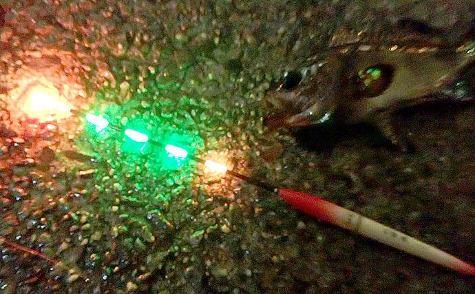 波止釣りのマストアイテム『電気ウキ』の基礎知識 電池の小型化で進化