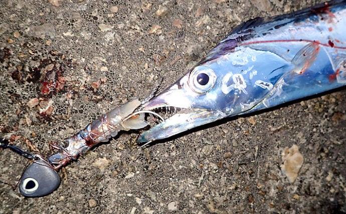 『スーパーライトテンヤ』で楽しむ波止タチウオ釣り 流行間違いなし!