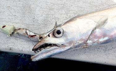 船テンヤタチウオ釣りで一本針が魚に掛かるメカニズム 釣り方別に解説