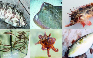 【大阪湾エリア】波止から釣れる危険な生き物7選 見かけたら要注意!