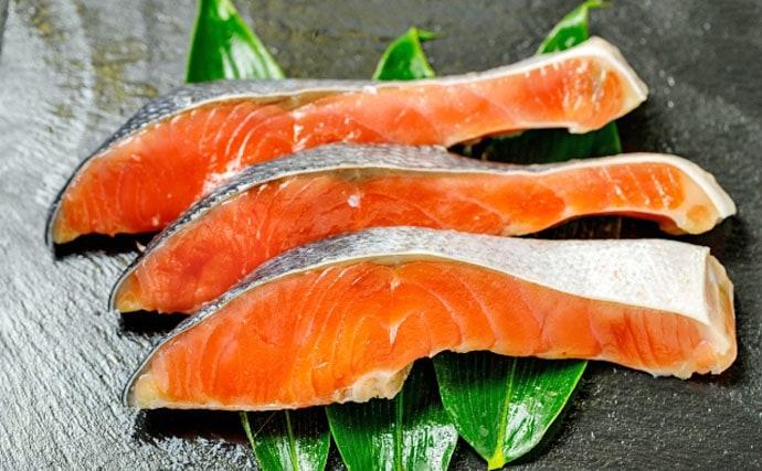 サカナの『赤身』と『白身』の違いを解説 タンパク質含有量で区別?