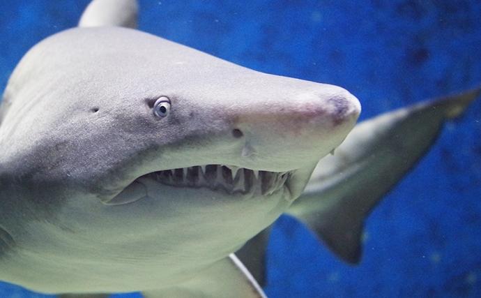 長生きをする魚5選 最長寿は驚きの512歳ニシオンデンザメ?