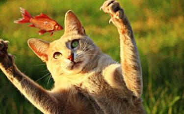 「猫=魚好き」のイメージは日本ならでは 人間の食生活が深く関連