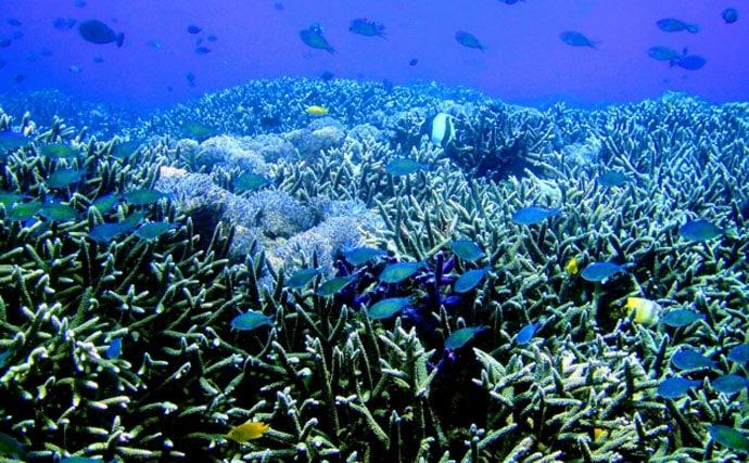 沖縄エリアのサンゴ減少の原因を考察 オニヒトデ大発生も理由の一つ?