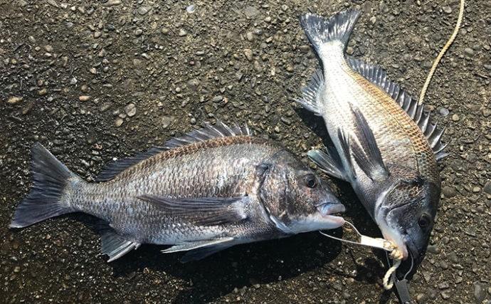 波止フカセ釣りで年無し頭に夏チヌ6匹キャッチ【和歌山県・宇久井港】