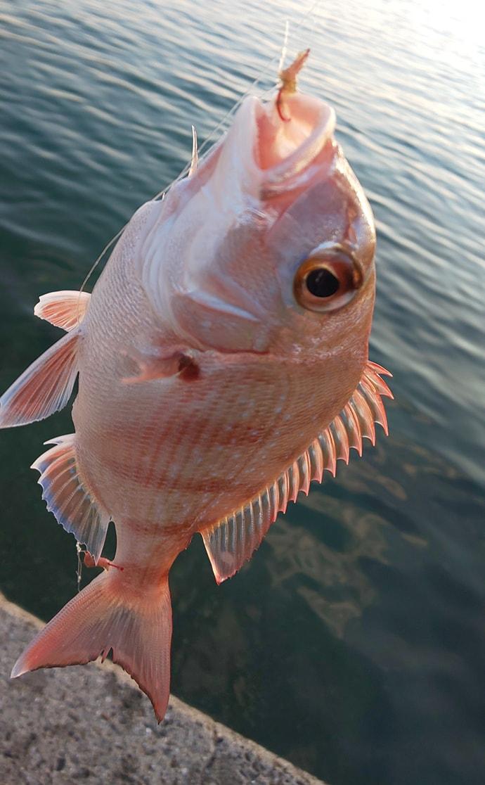 釣れるものを釣るスタイルで夏波止の小物と遊ぶ【和歌山・戸坂漁港】