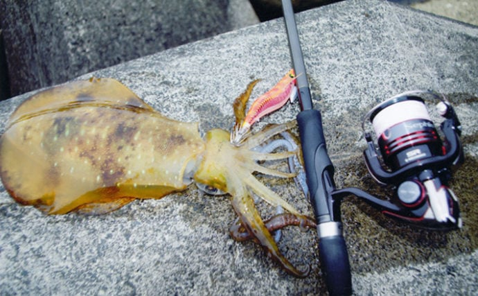 秋のアオリイカエギングとセットで楽しめる釣りを紹介 タックル流用OK