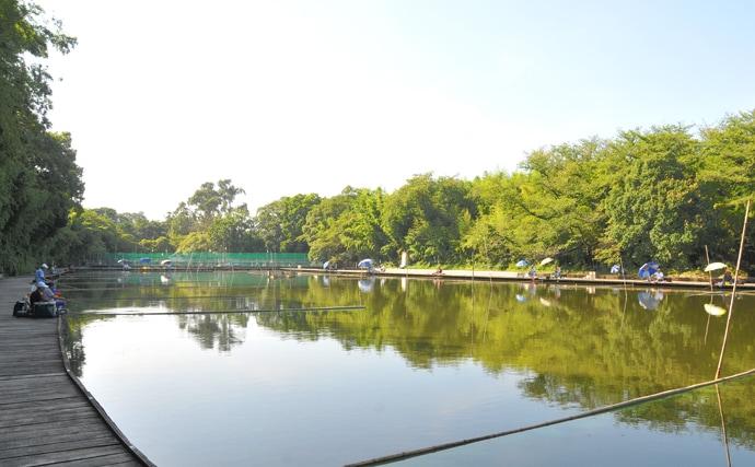 宮崎まこの一期一会♪カッツケ両ダンゴに挑戦【道満河岸へら鮒つり場】