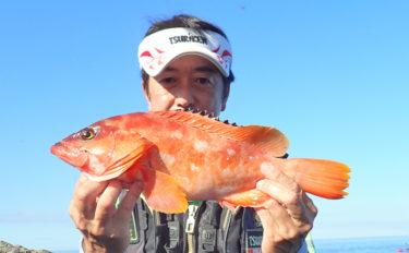 磯でのカゴ釣りで1kg頭にアカハタ連発 瀬ギワ狙いが的中!【天草】