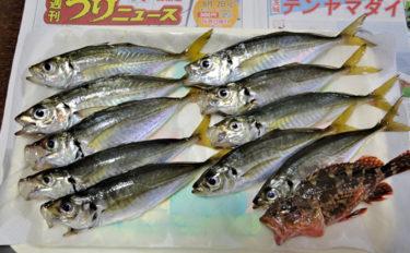 手こぎボート釣りでアジとカサゴ32尾 コマセ&胴突きで【斉田ボート】