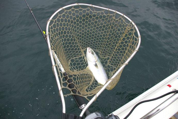 落とし込み釣りで旬のツバスをツ抜け 決めてはベイトサイズ【播磨灘】