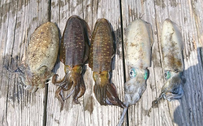 【三重県】沖釣り釣果速報 オニカサゴ数釣りに秋アオリも開幕!