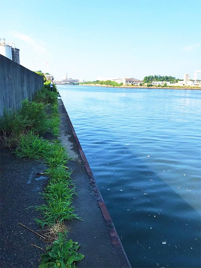 都市河川でシーバスゲーム&サヨリ釣りを満喫【千葉県・村田川】