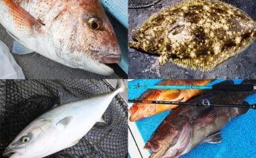 【九州エリア2019】秋の大型魚狙いに最適な4つの釣り方を解説