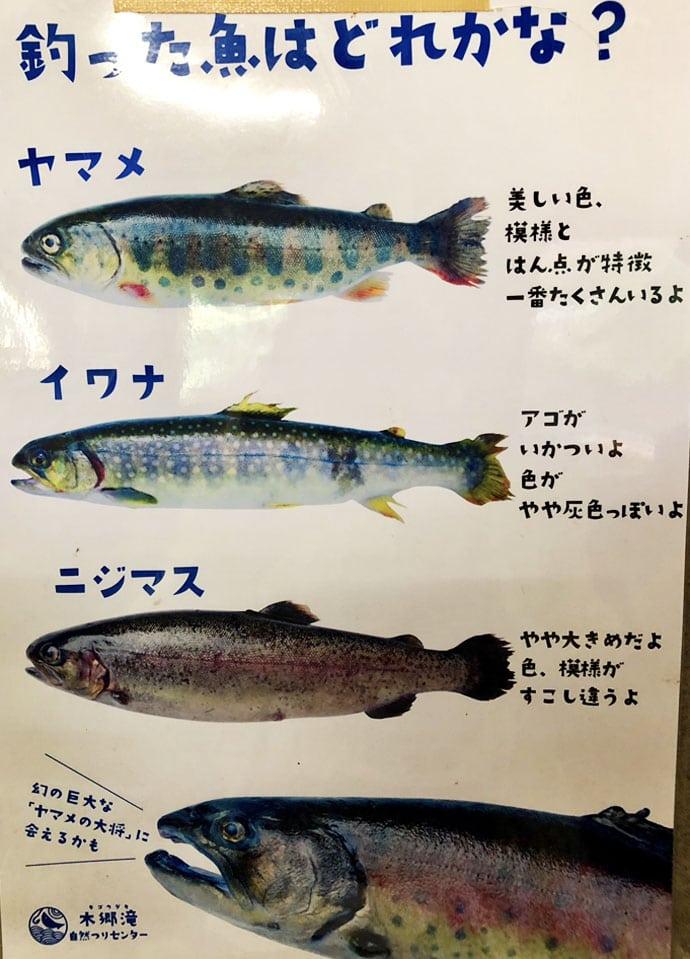 渓流管釣りのエサ釣りで35cm頭ヤマメ連発【木郷滝自然つりセンター】