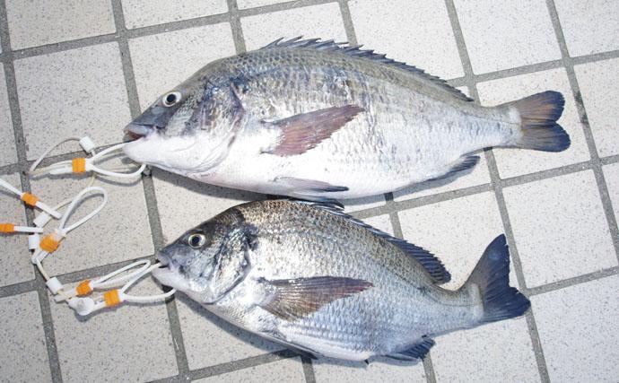 【西日本編】9月が旬の美味しい海の幸5選 『川アンコウ』はナマズ?