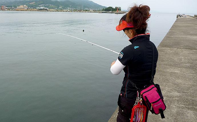 エギング初心者に秋アオリイカを簡単に釣らせるマル秘テクニック公開