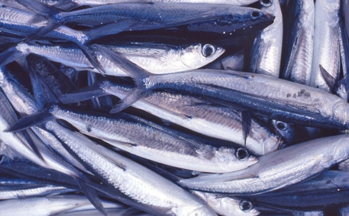 【東日本編】8月に旬を迎える美味しい海の幸5選 『大アサリ』に注目