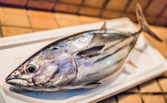【西日本編】8月に旬を迎える美味しい海の幸5選 カツオの旬は2回?