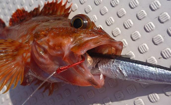 釣りで使う『ハリ外し』の使い方 代表的な2つの状況別に徹底解説!