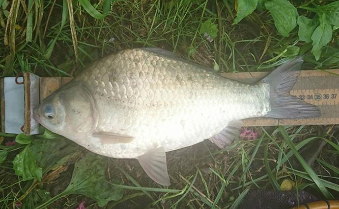 秋のダム湖でヘラブナ釣り 尺2寸前後がコンスタントに【奈良・布目ダム】