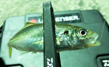 アタるのに釣れないが楽しい『豆アジング』釣行レポート【淡路島・岩屋】