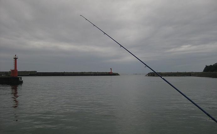 港内の投げキス釣りで17cm頭に本命14匹 近投でOK!【印南港】