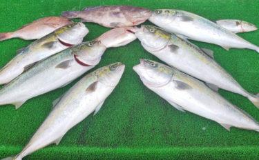 【三重県】海上釣り堀最新釣果 魚種豊富で秋の行楽シーズンに最適!