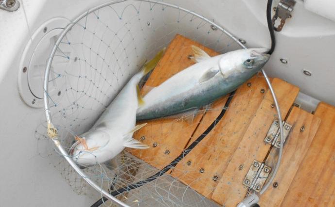 明石沖ボートチョクリ釣り 『超時合い』逃さず2時間でハマチ8匹!