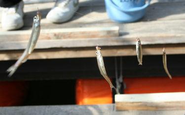 関西ワカサギ釣り場の選び方 4つのシチュエーションごとに解説