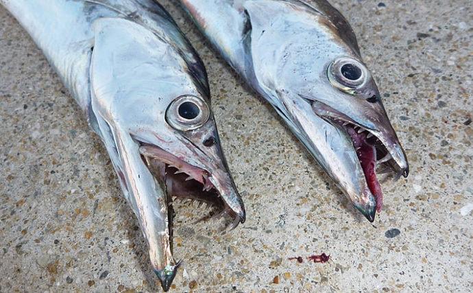 沖波止タチウオ釣行で97cm頭9匹 テンヤ釣り&電気ウキで【堺港】