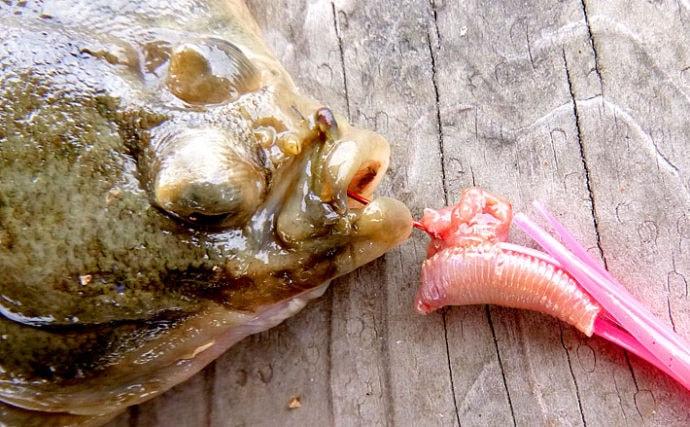 『虫エサ』の代表的な刺し方3選 出来る出来ないで釣果に大きな差も!