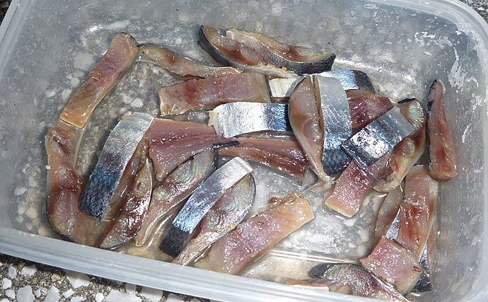 波止タチウオのシーズン&好釣り場がアナゴ狙いに最適だった 今が好機!