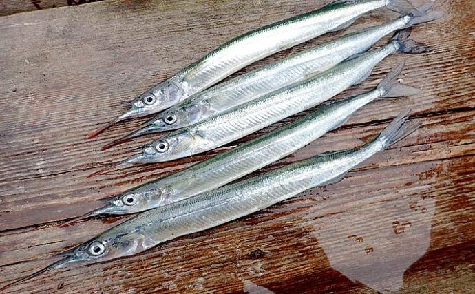 【釣魚レシピ】サヨリの天ぷら&みりん干し:釣り場で捌く理由とは?