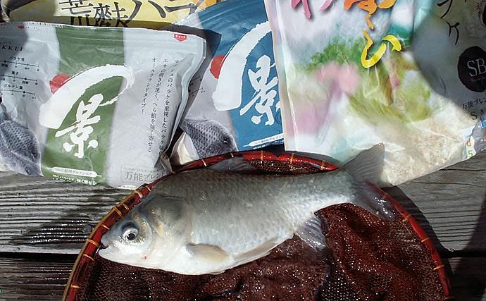 台風一過の管理池でヘラブナ釣り ダンゴエサで活性激高【竜田川釣り池】