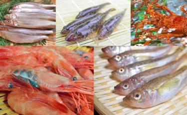 【東日本編】10月が旬の美味しい海の幸5選 ししゃもはお寿司が絶品