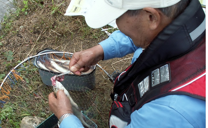 『布目ダム釣り大会』取材レポート 40cm超ニジマス釣果も【奈良】