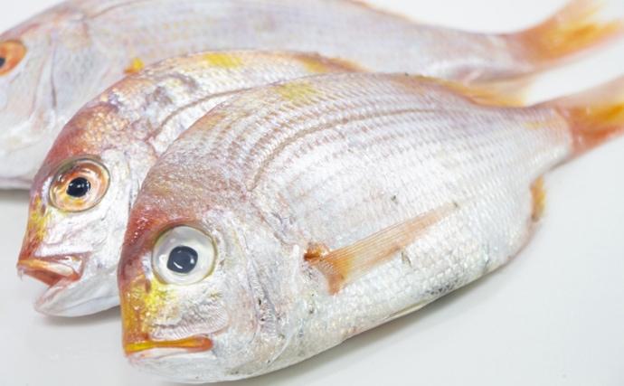 【西日本編】10月に旬を迎える美味しい海の幸5選 『泉ダコ』が絶品