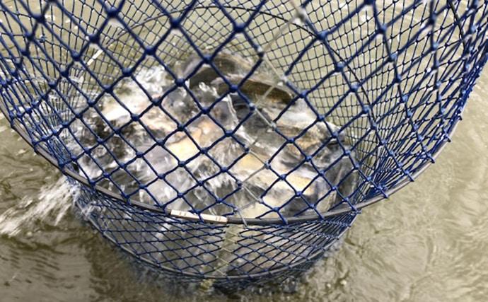 ヘラブナまだまだ夏の名残 浅ダナ両ダンゴで68匹!【隠れ谷池】