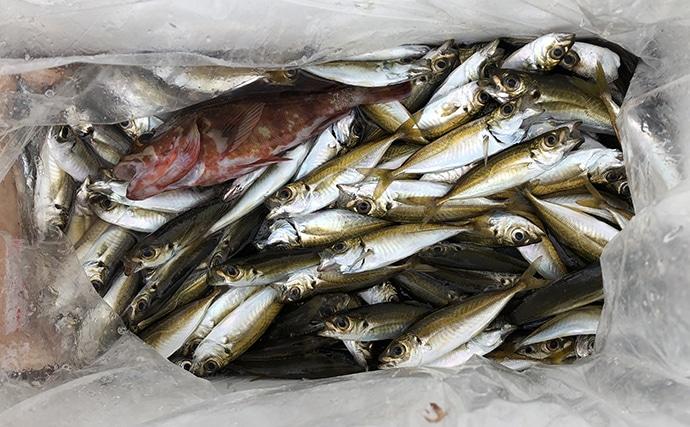 波止の五目釣りを満喫 アジング&エサタチウオ&サビキ釣り【淡路島】