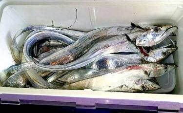 大阪湾『テンヤタチウオ』釣り ベイト不在パターンを攻略【ヤザワ渡船】
