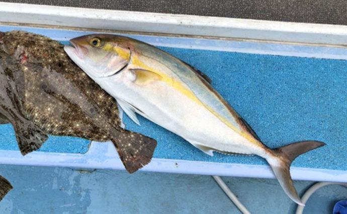 活きイワシ泳がせ釣りで70cm級カンパチにヒラメ3尾【強丸】