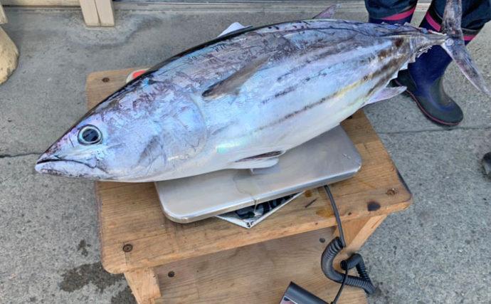 相模湾カツオ釣りを楽しむ 平均3kgの最大5.9kg!【まごうの丸】
