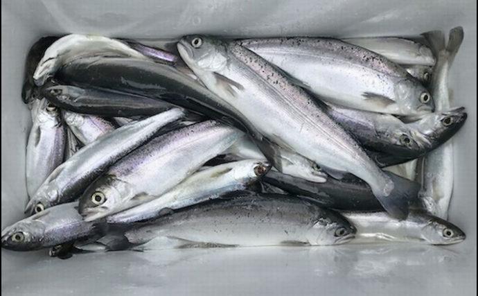 秋シーズン開幕の西湖『ヒメマス』釣り 28.5cm頭に30尾を手中