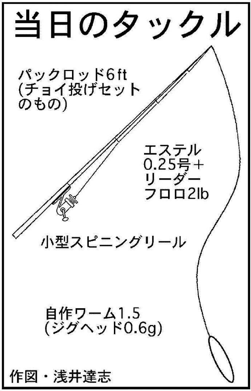 『100均タックル』アジングで24cm頭に良型中心54匹【安乗漁港】