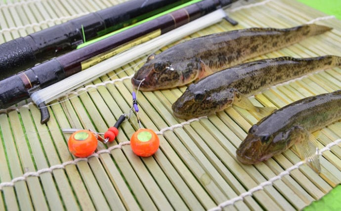 江戸前高級魚『マハゼ』の釣り方 船&陸っぱりそれぞれのキホンを紹介